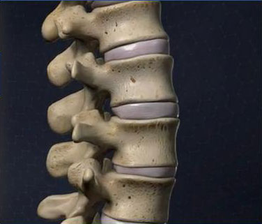 Anatomy-Spine-image